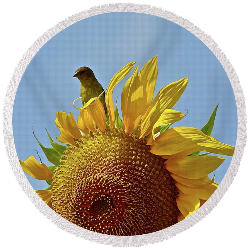 Flower Round Beach Towel featuring the photograph We Match by Diana Hatcher