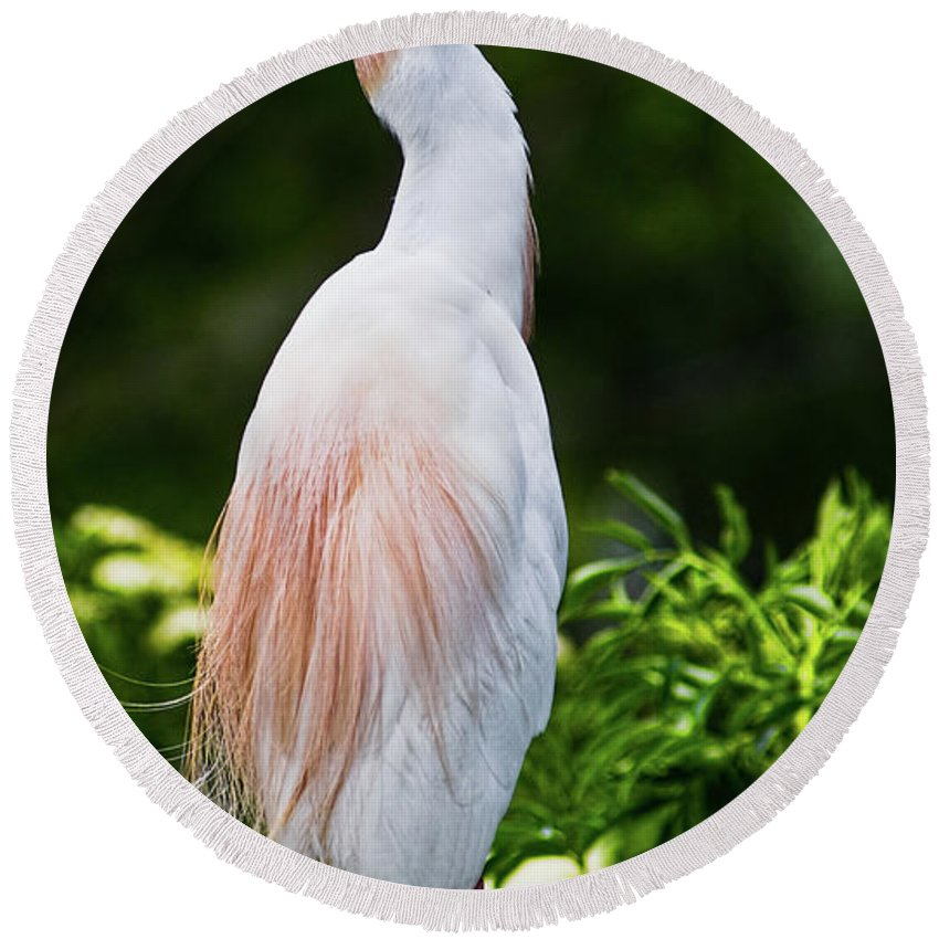 Cattle Egret Round Beach Towel featuring the photograph Wearing Spring Colors by Christopher Holmes