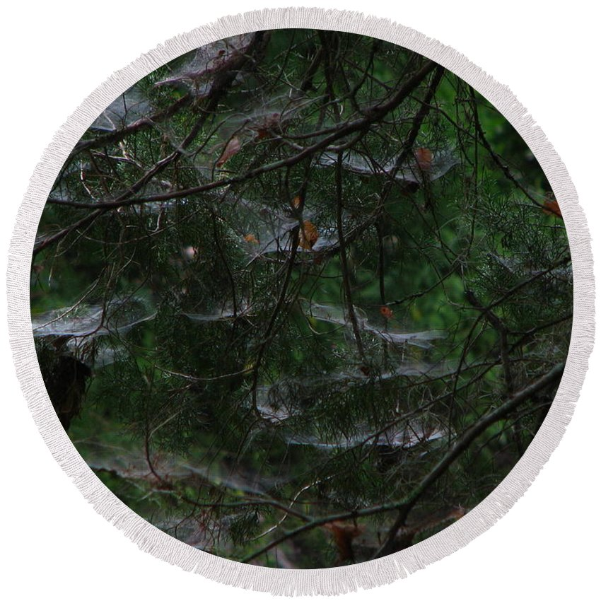 Patzer Round Beach Towel featuring the photograph Webs Of A Tree by Greg Patzer