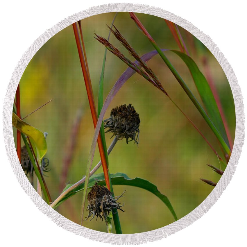 Ann Keisling Round Beach Towel featuring the photograph Weeds by Ann Keisling