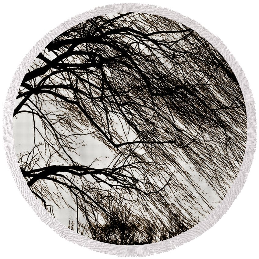 Weeping Willow Round Beach Towel featuring the photograph Weeping Willow Tree by Carol F Austin