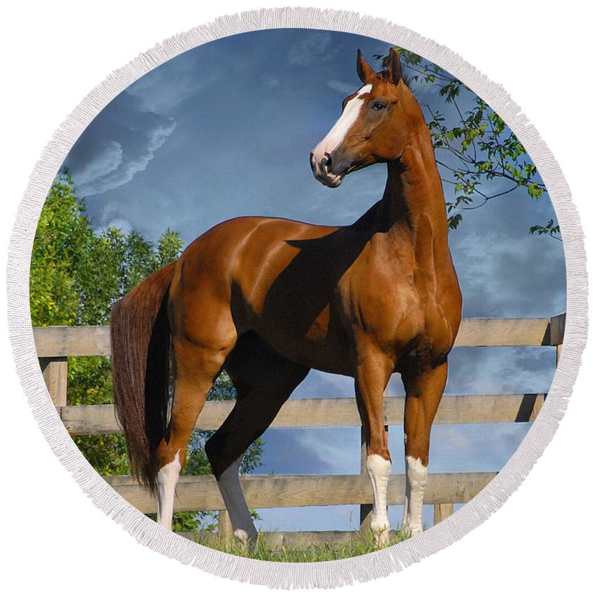 Horses Round Beach Towel featuring the photograph Welt Adel by Fran J Scott