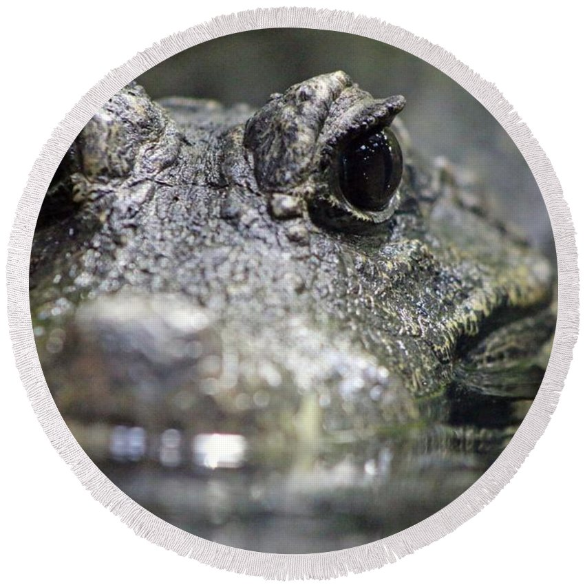 West African Dwarf Crocodile Round Beach Towel featuring the photograph West African Dwarf Crocodile - Captive 03 by Pamela Critchlow