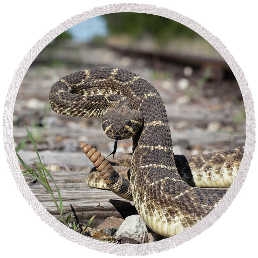 Western Diamondback Tracks Round Beach Towel
