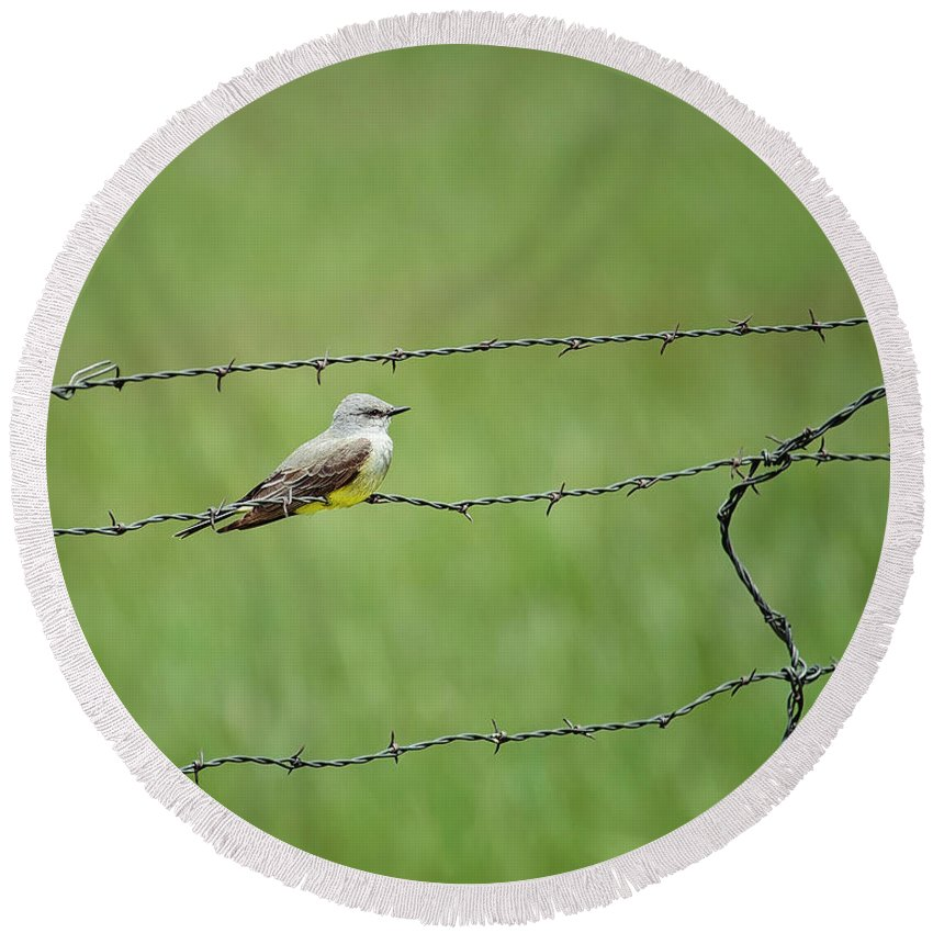 Tim Flanigan Round Beach Towel featuring the photograph Western Kingbird by Timothy Flanigan