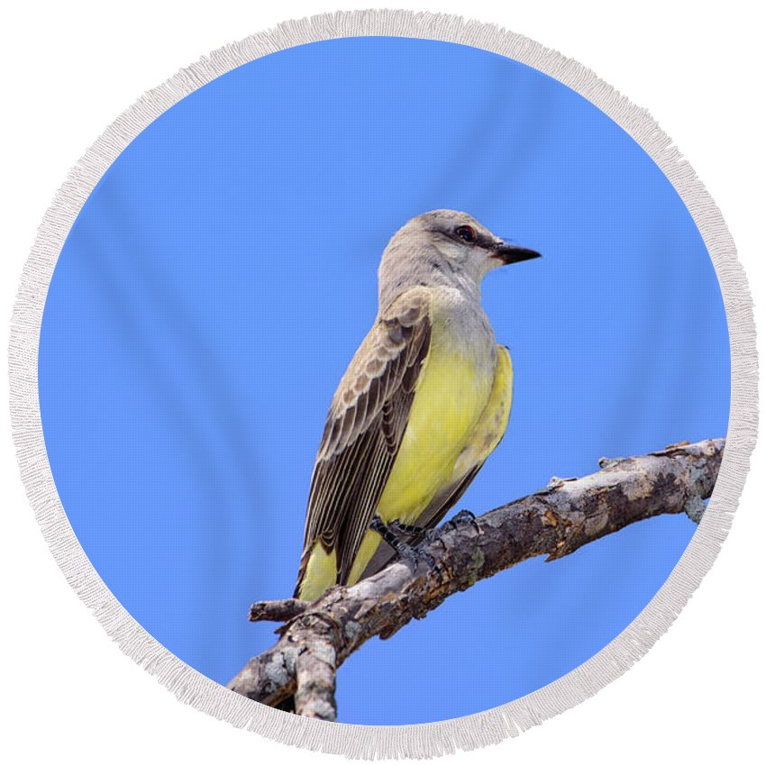 Bird Round Beach Towel featuring the photograph Western Kingbird Tyrannus Verticalis by Jeff Jarrett