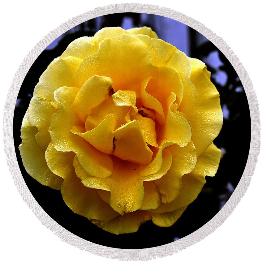 Clay Round Beach Towel featuring the photograph Wet Yellow Rose by Clayton Bruster