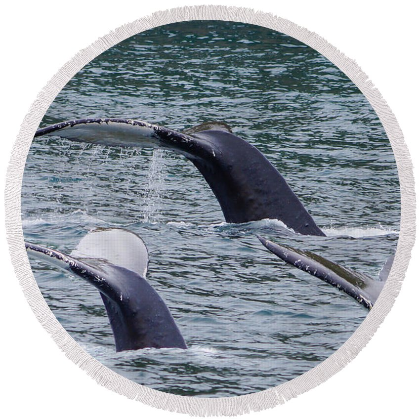 Alaska Round Beach Towel featuring the photograph Whale Of Tales by Jennifer White
