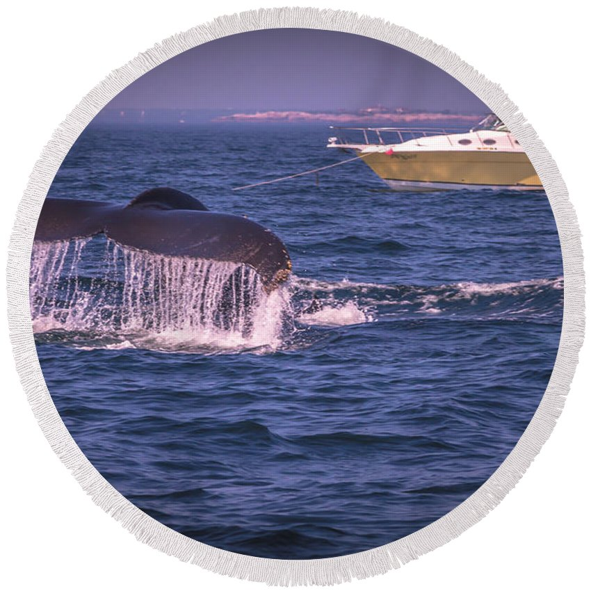 Ocean Round Beach Towel featuring the photograph Whale Watching - Humpback Whale 3 by Claudia M Photography