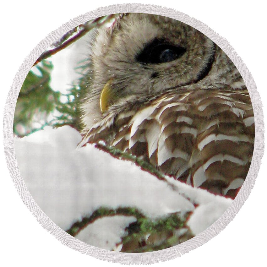 Owl Round Beach Towel featuring the photograph What A Hoot by Lisa Jacob