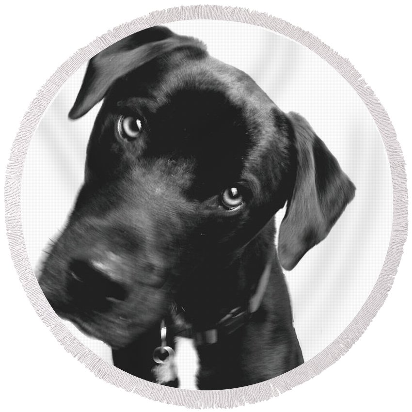 Labrador Round Beach Towel featuring the photograph What by Amanda Barcon