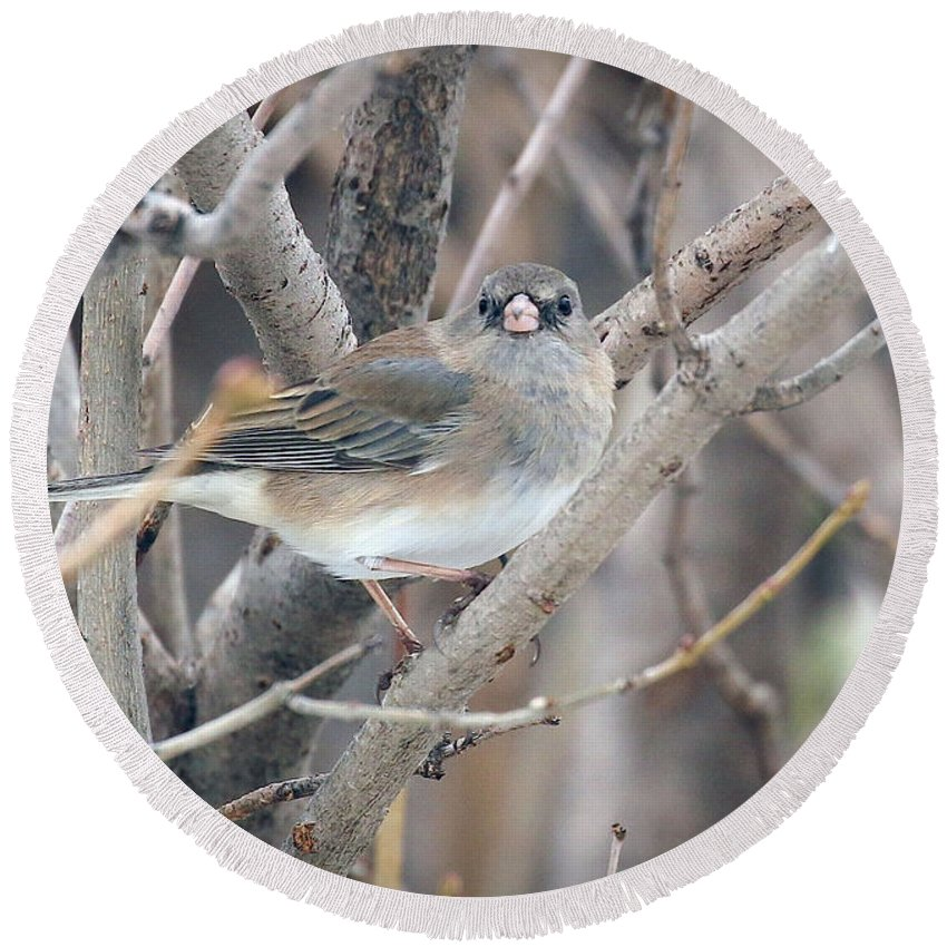 Junco Round Beach Towel featuring the photograph What Another Photo by Angela Koehler