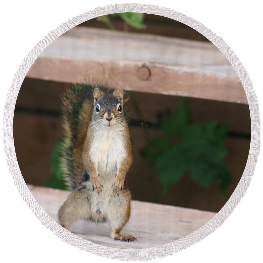 Squirrel Mother Nature Wild Animal Cute Dancing Round Beach Towel featuring the photograph What You Lookin At by Andrea Lawrence