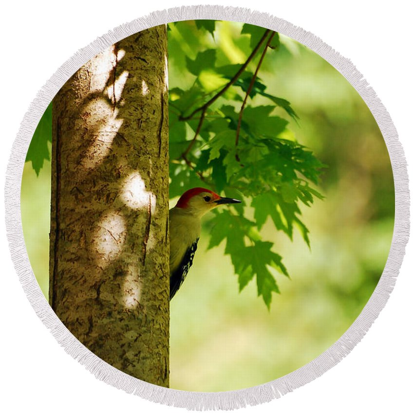 Woodpecker Round Beach Towel featuring the photograph Whats A Woodpecker To Do by Lori Tambakis