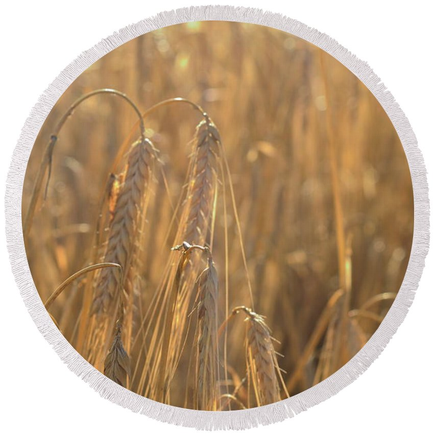 Photography Wheat Corn Field Sun Golden Meadow Landscape Nature England Round Beach Towel featuring the photograph Wheat by Delia Palmer