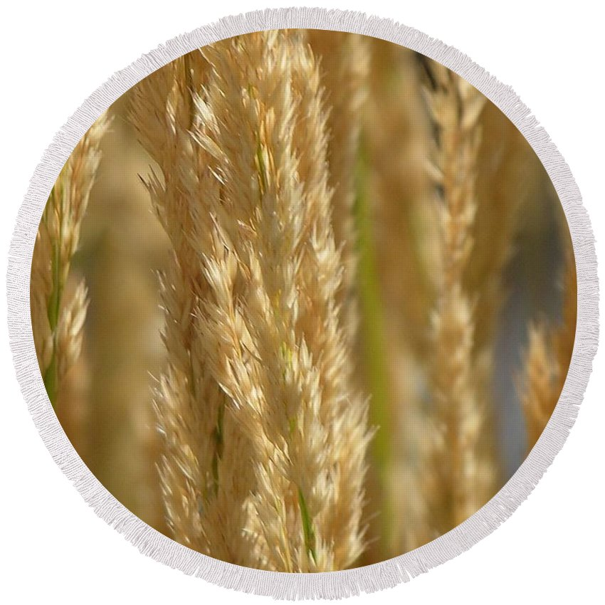 Wheat Round Beach Towel featuring the photograph Wheat Stalks by Diane Greco-Lesser