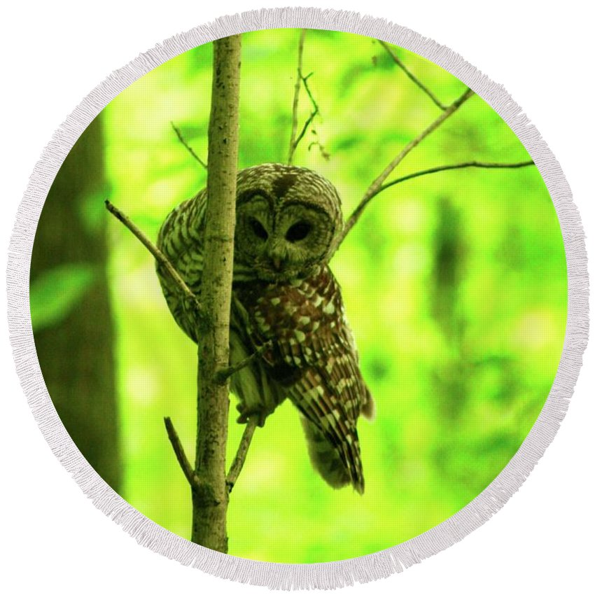 Barred Owl / Dolly Sods Wilderness Preserve Round Beach Towel featuring the photograph Where Did He Go? by Gregory E Dean