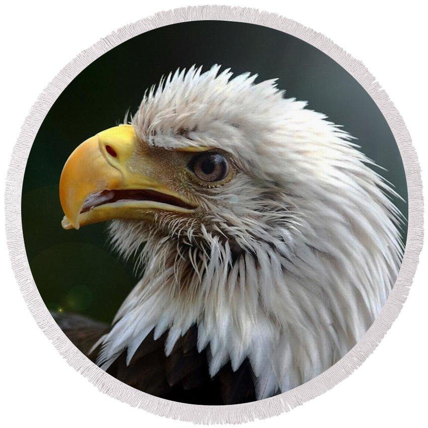 Bird Round Beach Towel featuring the photograph Where Eagles Dare 3 by Randy Matthews