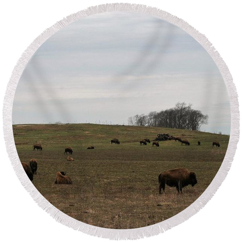 Bison Round Beach Towel featuring the photograph Where The Buffalo Roam 2 by Lew Wescott