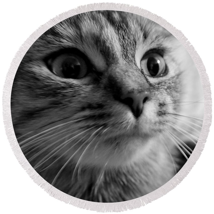 Cat Round Beach Towel featuring the photograph Whered Ya Get Those Peepers by Lori Pessin Lafargue