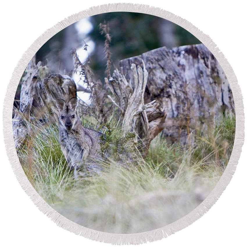 Kangaroo Round Beach Towel featuring the photograph Where's The Roo by Michelle Ngaire