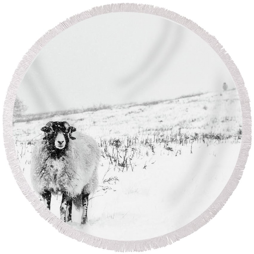 Swaledale Round Beach Towel featuring the photograph Which Way Is South? by Janet Burdon