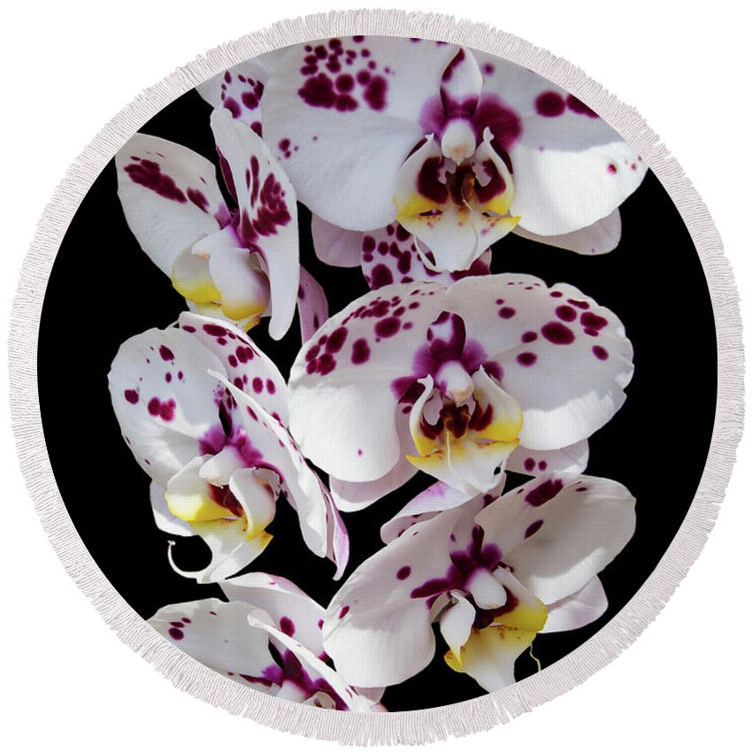 Orchid Round Beach Towel featuring the photograph White And Magenta Orchids by Bob Slitzan
