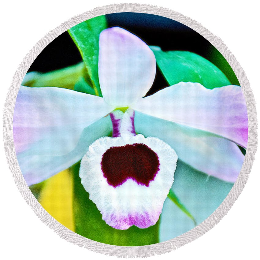 White And Purple Orchid At Pilgrim Place In Claremont Round Beach Towel featuring the photograph White And Purple Orchid In Greenhouse At Pilgrim Place In Claremont-california by Ruth Hager