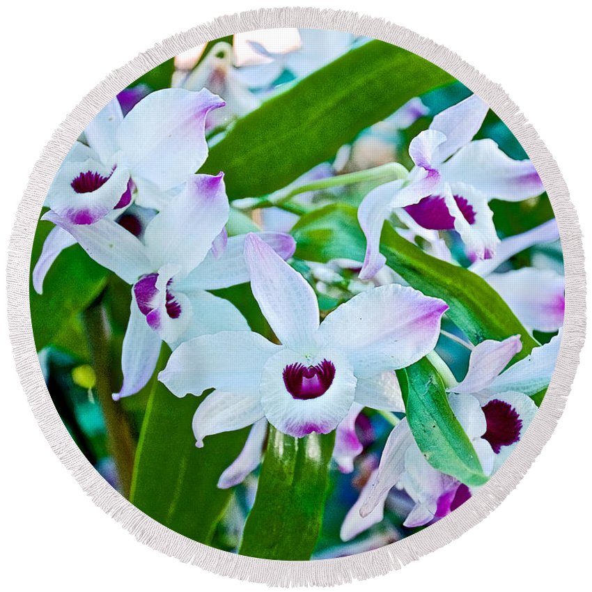 White And Purple Orchids At Pilgrim Place In Claremont Round Beach Towel featuring the photograph White And Purple Orchids In Greenhouse At Pilgrim Place In Claremont-california by Ruth Hager