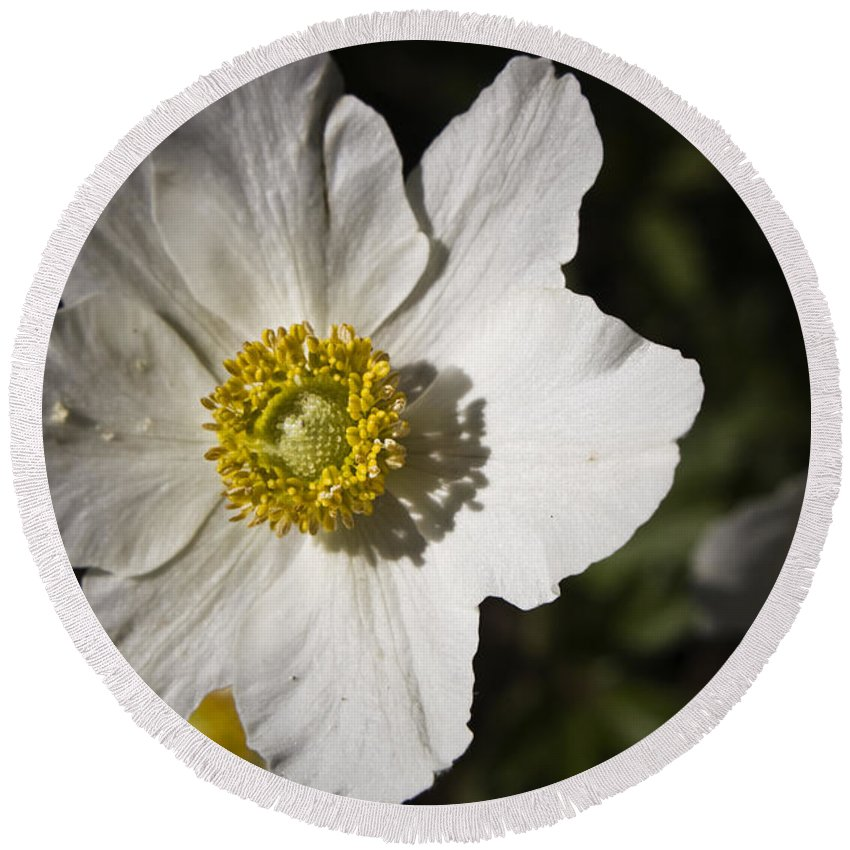 Flower Round Beach Towel featuring the photograph White Anemone by Teresa Mucha