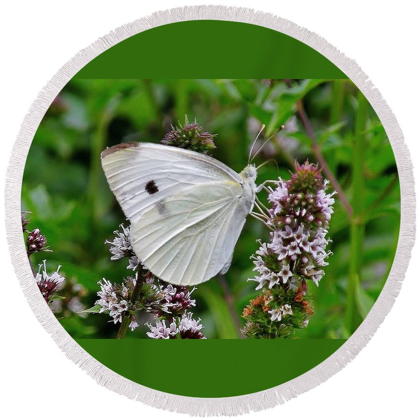 Butterfly Round Beach Towel featuring the photograph White Butterfly At The Good Earth Market by Kim Bemis