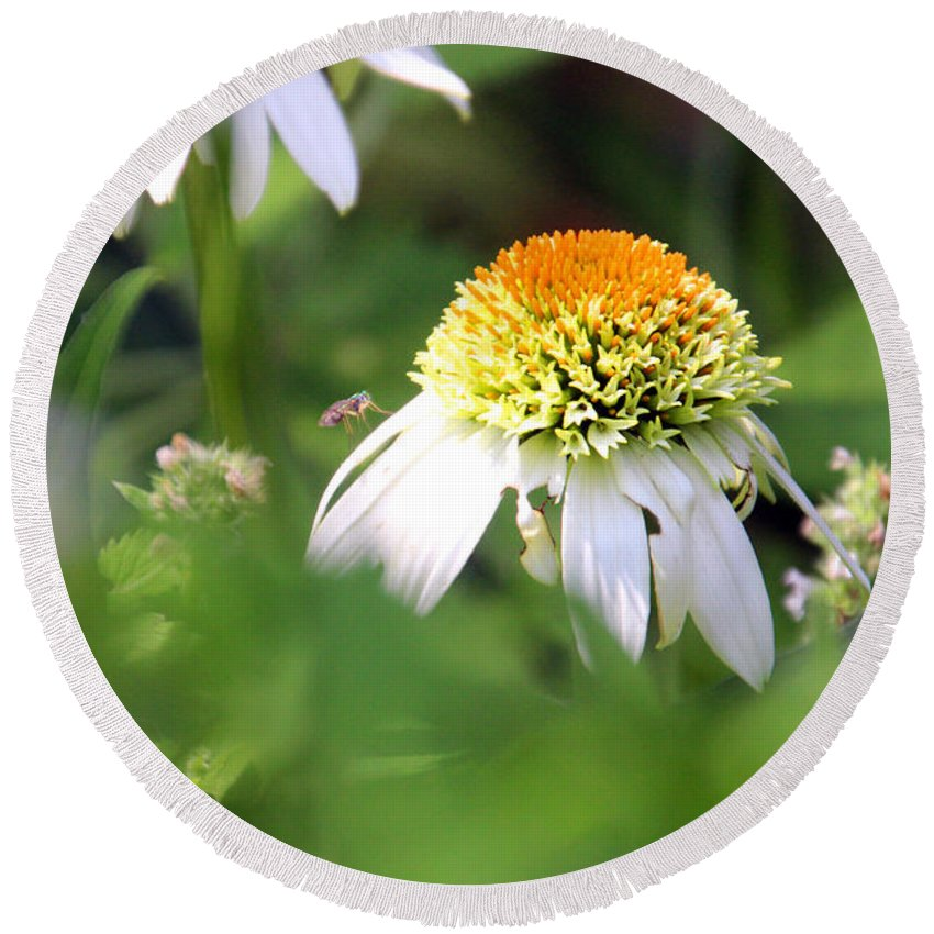 Coneflower Round Beach Towel featuring the photograph White Coneflower by Carolyn Stagger Cokley
