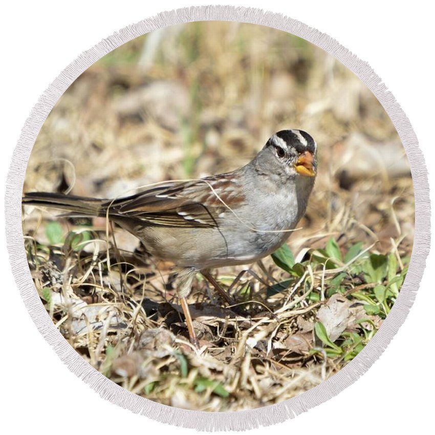 Animal Round Beach Towel featuring the photograph White-crowned Sparrow by Bonfire Photography