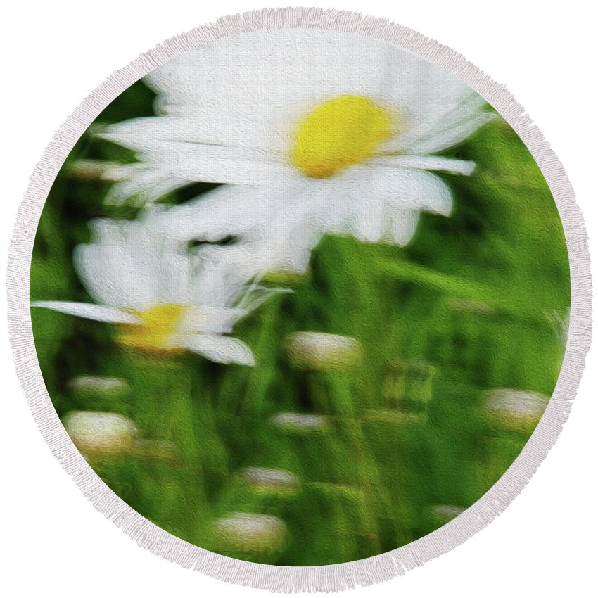 White Daisy Round Beach Towel featuring the photograph White Daisy Digital Oil Painting by Vishwanath Bhat