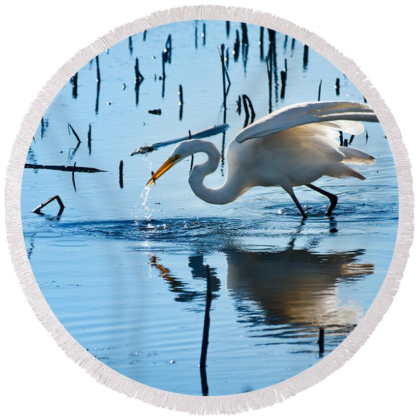 Bird Round Beach Towel featuring the photograph White Egret At Horicon Marsh Wisconsin by Steve Gadomski