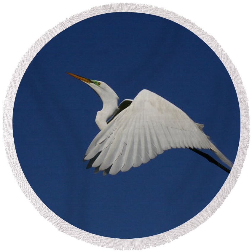 Birds Round Beach Towel featuring the photograph White Egret Soaring Into The Blue by Myrna Bradshaw