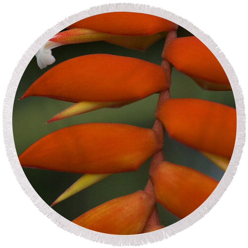 Heliconia Round Beach Towel featuring the photograph White Flower by Karen Ulvestad