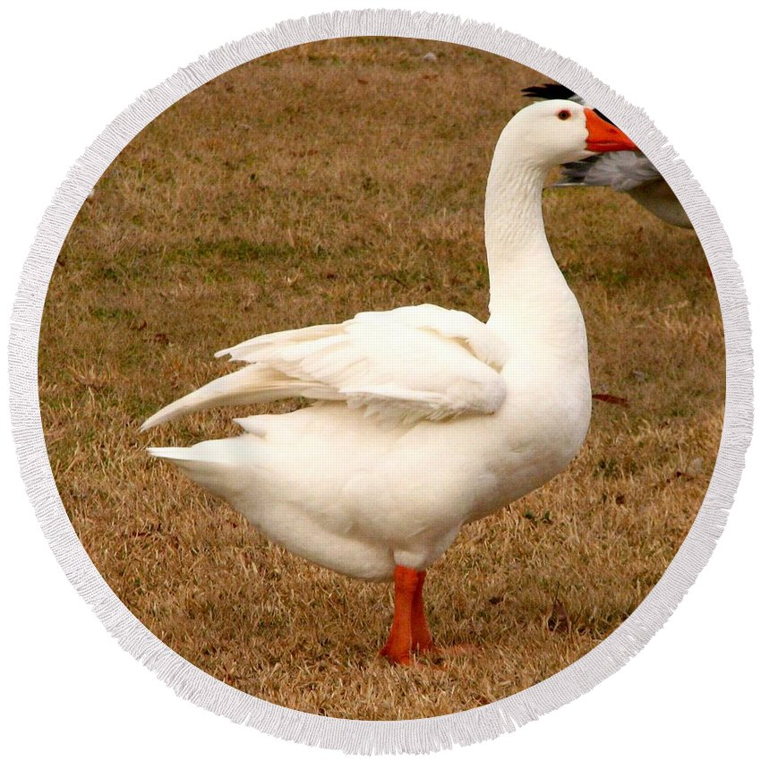 Geese Round Beach Towel featuring the photograph White Goose 2 by J M Farris Photography