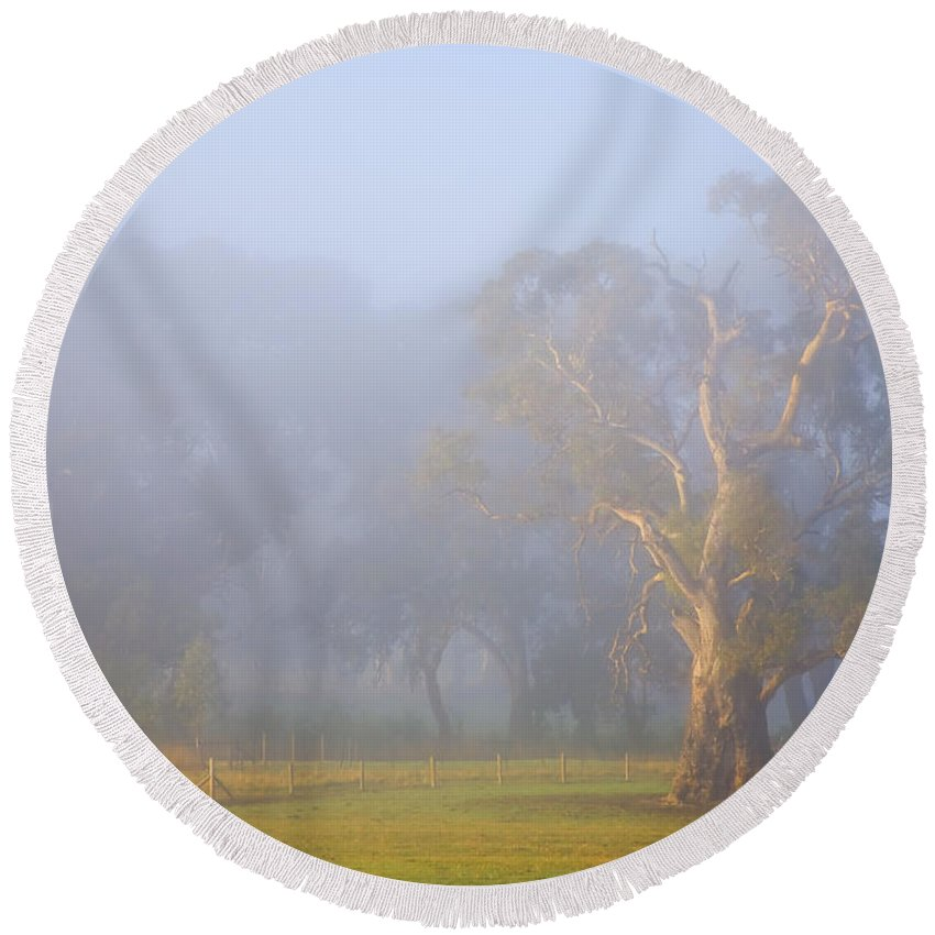 Tree Round Beach Towel featuring the photograph White Gum Morning by Mike Dawson