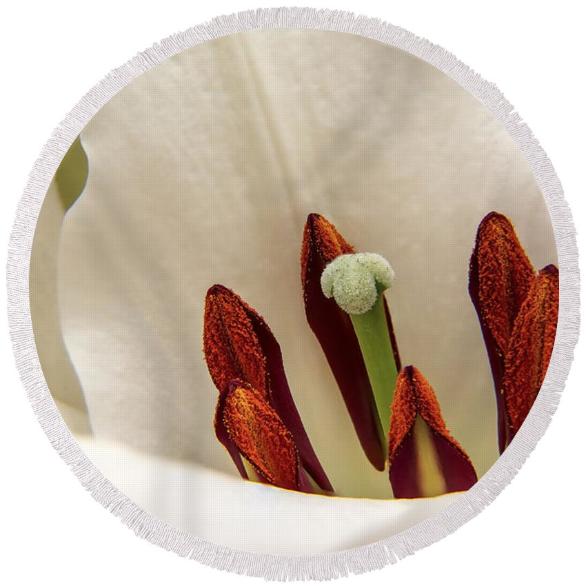 Lilies Round Beach Towel featuring the photograph White Lily by Sebastien Coell