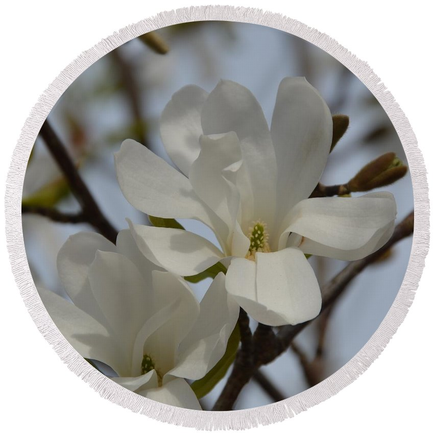 Blossom Round Beach Towel featuring the photograph White Magnolia Blooming In Spring by Lena Photo Art