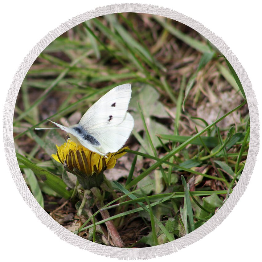 Moth Round Beach Towel featuring the photograph White Moth by Douglas Milligan