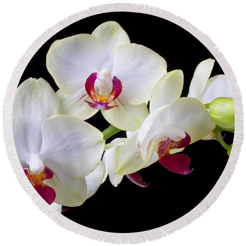 White Orchids Round Beach Towel featuring the photograph White Orchids by Garry Gay