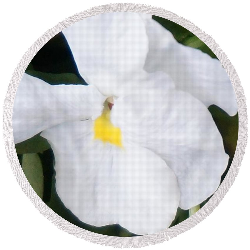 Pansies Round Beach Towel featuring the photograph White Pansy by Maxine Billings
