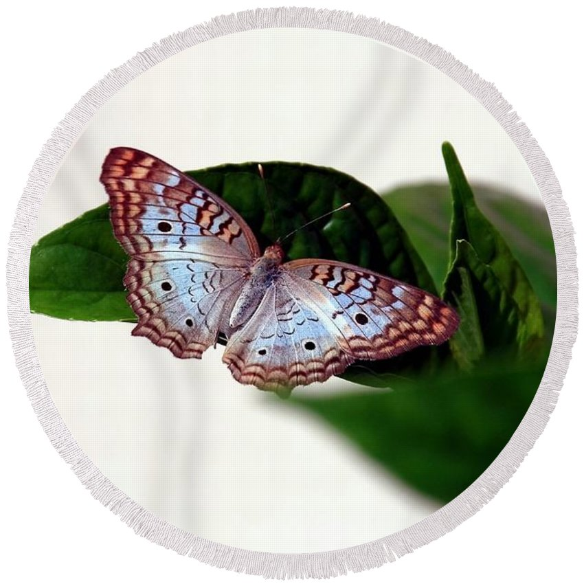 Butterfly Round Beach Towel featuring the photograph White Peacock Butterfly 2 by Randy Matthews