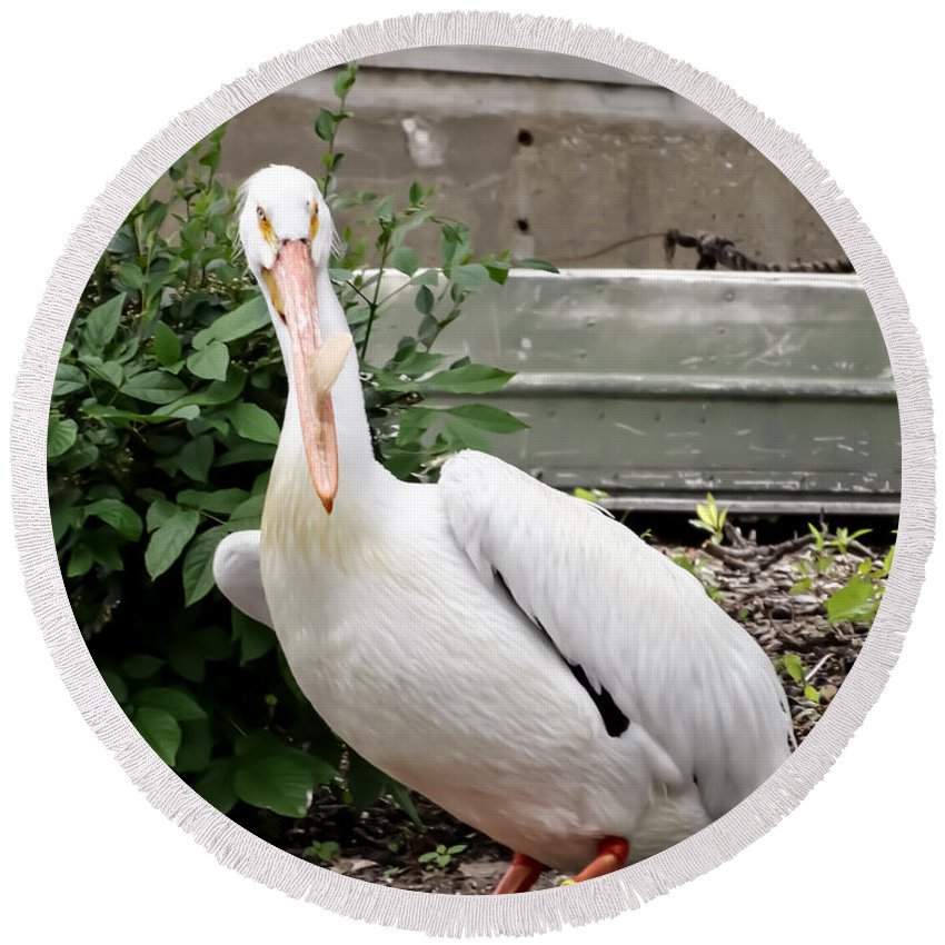 White Pelican Round Beach Towel featuring the photograph White Pelican by Cynthia Woods
