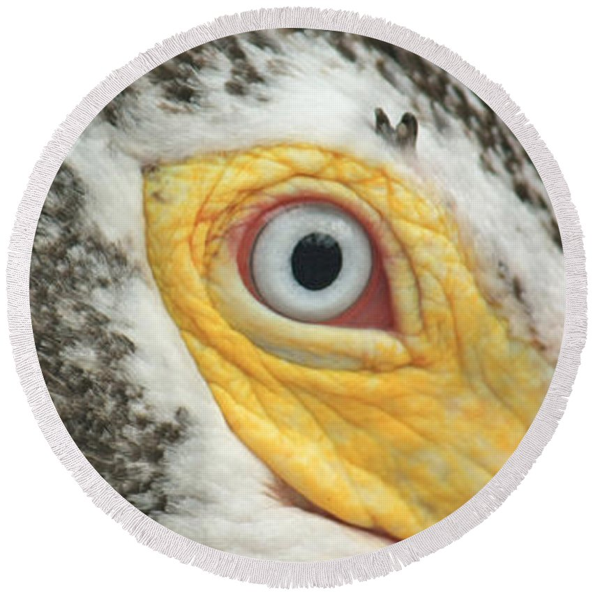 Pelican Round Beach Towel featuring the photograph White Pelican Eye by Terri Mills