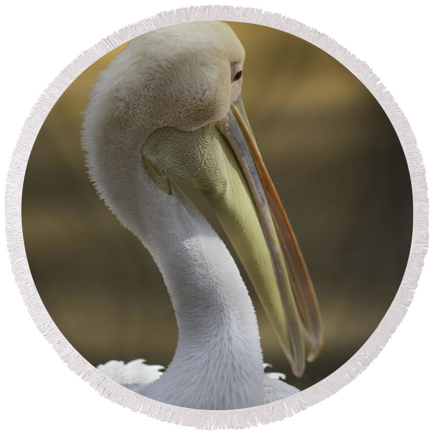 Wildlife Round Beach Towel featuring the photograph Shy White Pelican by Nancy Forehand