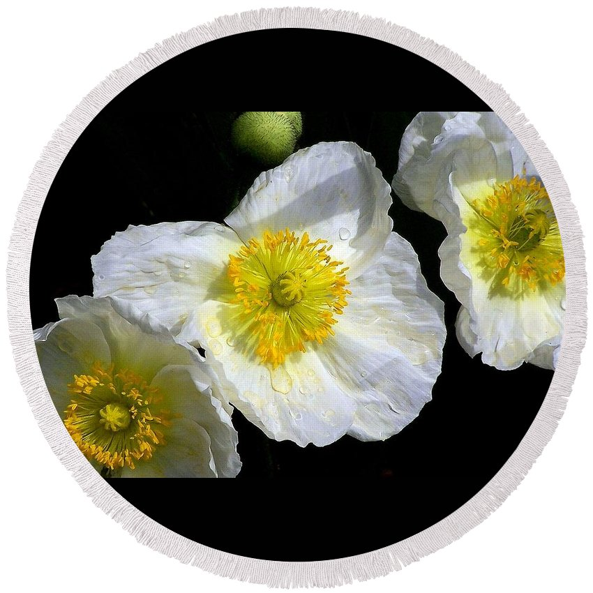 White Round Beach Towel featuring the photograph White Poppy Trio Photograph by Kimberly Walker