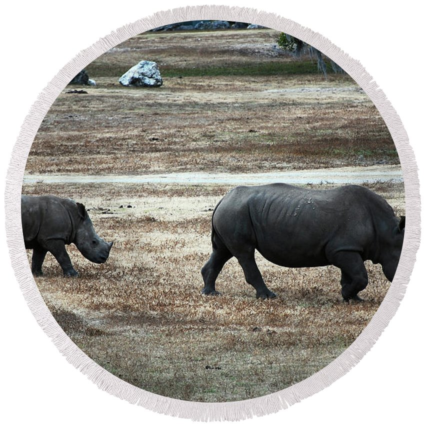 White Rhino's Round Beach Towel featuring the photograph White Rhino's by Robert Meanor